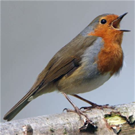 bird sounds review educational app store