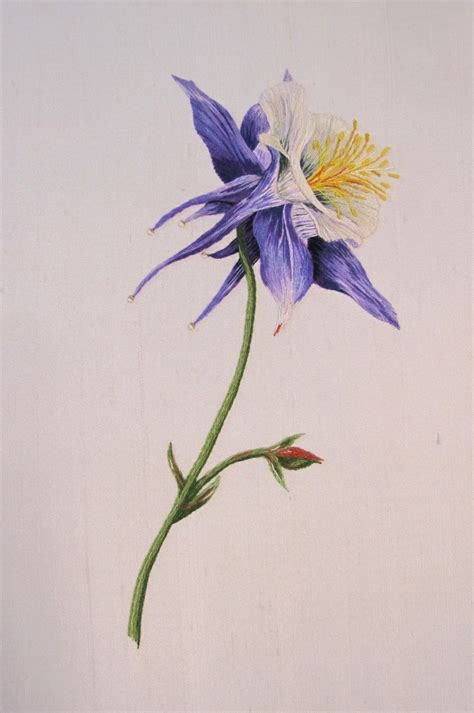 columbine tattoo 17 best images about columbine on watercolors
