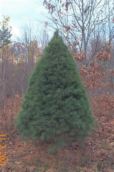 small evergreen trees for landscaping newsonair org