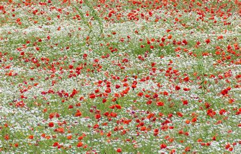 prati in fiore prati in fiore foto immagini piante fiori e funghi