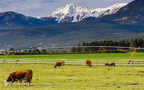 dude ranch savvy cattle ranch investing fay ranches