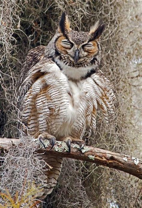Happy Owl Top happy owl birds