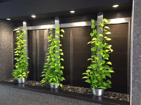 indoor vine plants green wall for your office why vertical wall gardens are