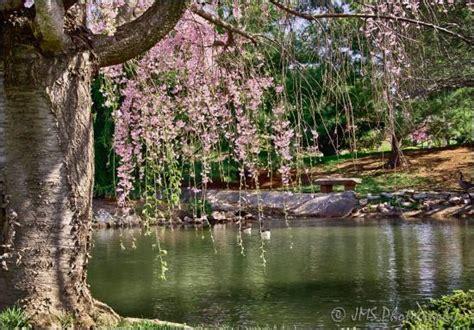 Japanese Stroll Garden by Mizumoto Japanese Strolling Garden Picture Of Mizumoto