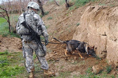 Dogs Of War Size M file working checks for explosives in afghanistan jpg