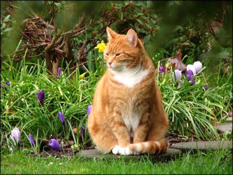 cat garden my garden content cat