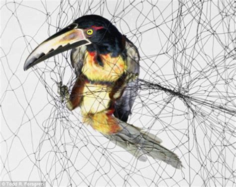 provocative pictures show species tangled up in