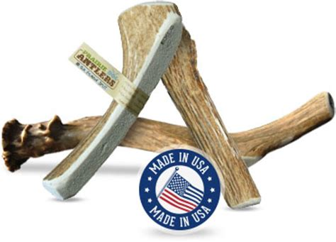 Naturally Shed Antlers For Dogs by Prairie Deer Antlers Chews 8 9 Inches