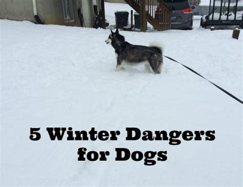 5 supplement must haves on a budget 5 winter dangers for dogs budget earth