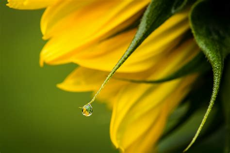 Cincin Water Drop Flower flower water drop macro wallpaper 1800x1201 171969 wallpaperup