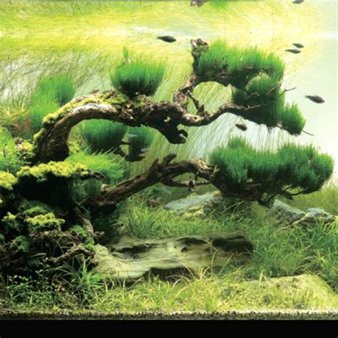 bonsai aquascape under water bonsai aqua scape tanks pinterest