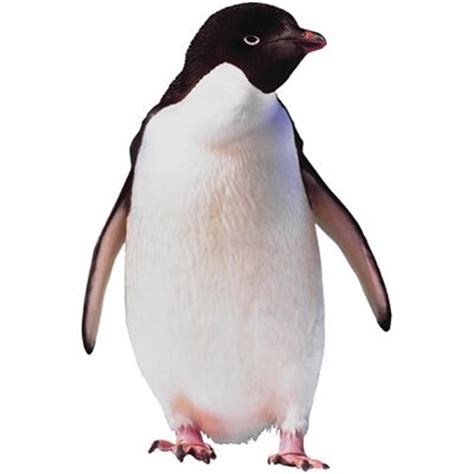 penguin meaning of penguin in longman dictionary of