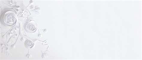 white background for pictures white background photos and wallpaper for free