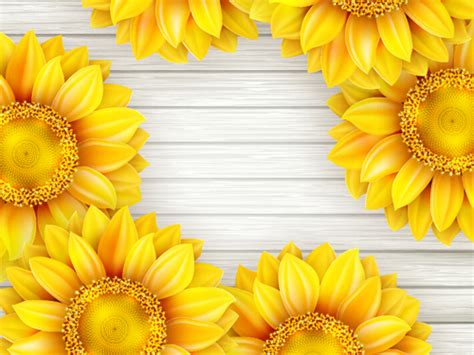 beautiful sunflowers  wooden background vector