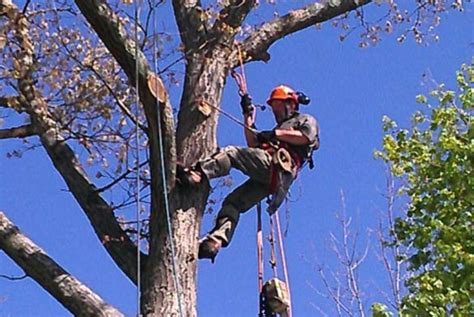 home insurance trees close to topnotch woodworks tree service
