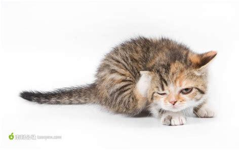 wallpaper dan cat 挠头的猫高清图片 素材公社 tooopen com