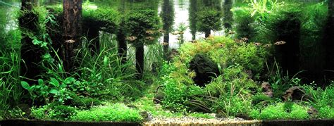 aquascape forest the international aquatic plants layout contest 2009 full