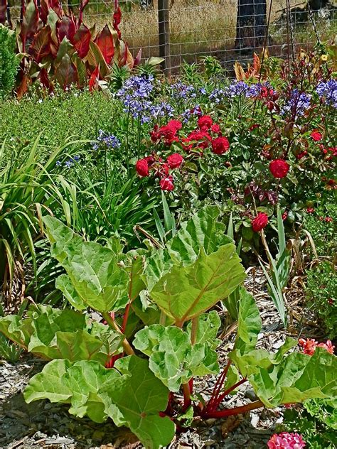 planting vegetables in your flower beds 171 central coast gardening