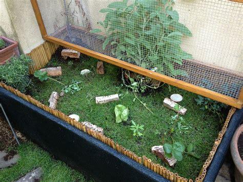 alimentazione tartarughe di terra piccole recinto piccole con tartaruga di terra recinto e tqljatq 1