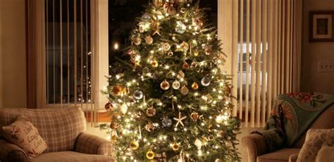 reason for christmas trees why we put up trees every year tiphero