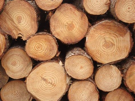 woodworking with logs pine wood logs pine wood logs pine wooden logs exporters