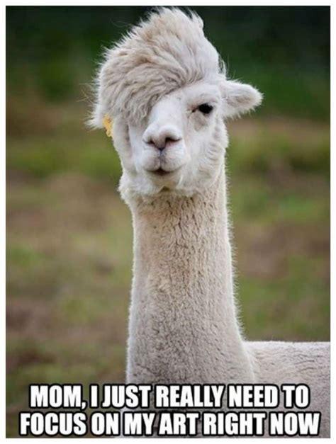 animal memes 20 hilarious animal memes that will make you lol