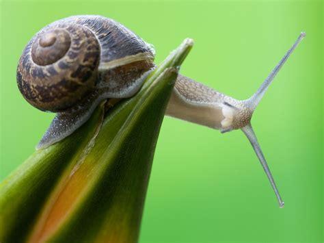 un caracol a snail la senda del caracol ideas y pensamientos