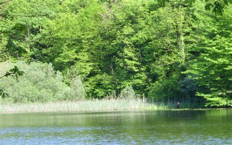 Große Bäume Verpflanzen 3752 by Die 88 Besten Fr 252 Hling Hintergrundbilder