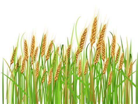 wheat clip wheat ear clipart clipground