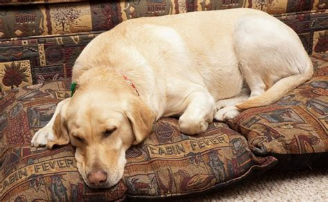 best dog bed for chewers best dog bed for chewers reviews and top tips for choosing