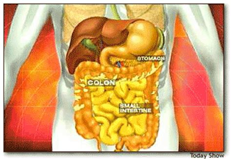 Detox Transverse Colon by Bloated At Healing Herbal Solutions W
