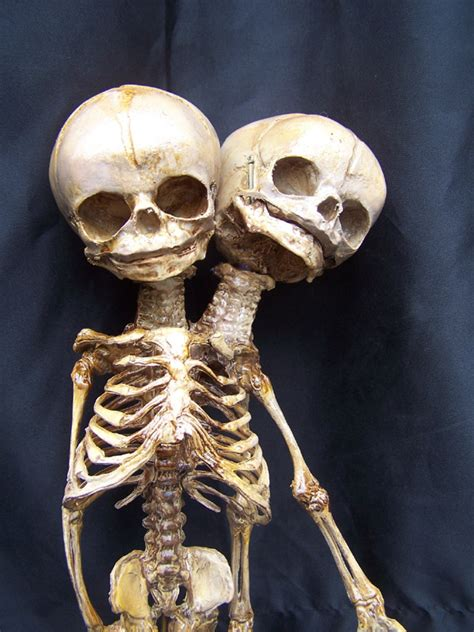 two headed skeleton two heads skeletons