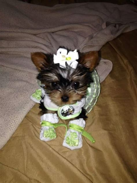 puppy boutique ny top 99 reviews and complaints about the puppy boutique