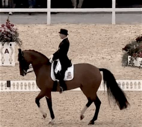 sport soundness and performance advice for dressage showjumping and event horses from chion riders equine scientists and vets books everything you need to about equestrian before the