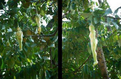 Sepatu Rajut Flat Cynthia Type 602 narilatha flower photos