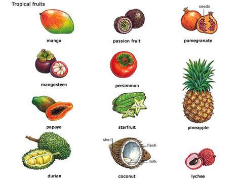 borne fruit definition tropical fruit comp jpg 720 215 540 ss14 inspiration