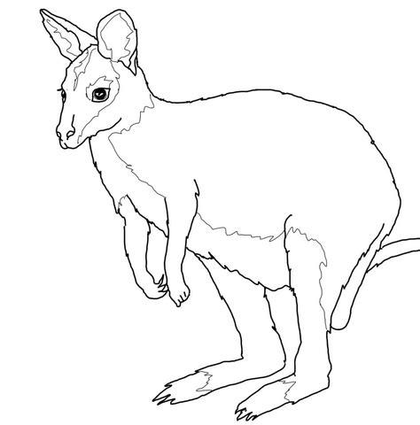 wallaby coloring page supercoloring com
