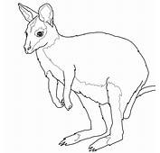 Wallaby Coloring Page  SuperColoringcom