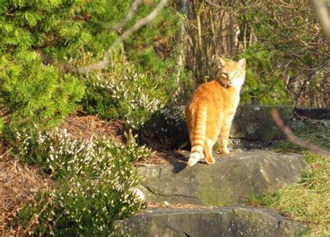 was vertreibt katzen aus dem garten katzenabwehr katzen vertreiben
