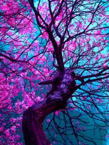 color trees photography tree beautiful purple colors leaves inhale