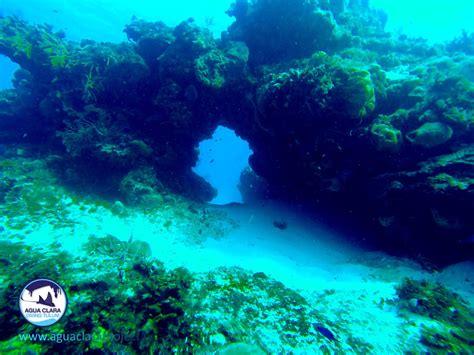 cozumel dive cozumel diving near tulum