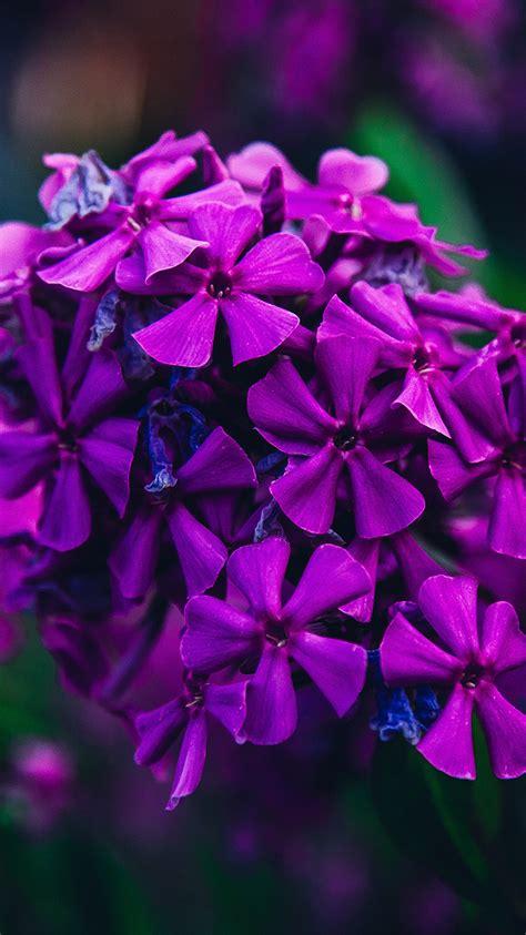apple wallpaper purple flower iphonepapers com apple iphone8 wallpaper nc57 nature