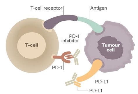 immune checkpoint inhibitors bring new to cancer patients feature pharmaceutical journal