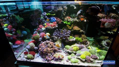 aquarium design san diego aqua sd san diego reef aquarium store saltwater aquarium
