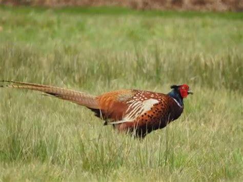 Nikon P900 Wildlife by Nikon Coolpix P900 Bird And Wildlife Pictures