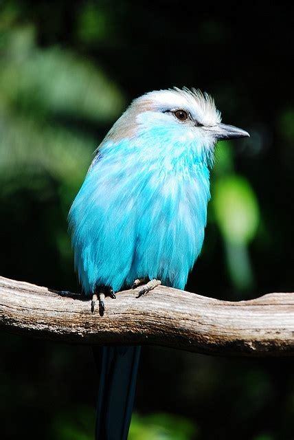 best 25 artificial birds ideas on pinterest tropical tropical colorful birds www imgkid com the image kid