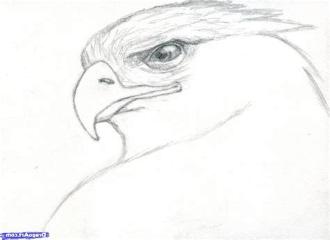 Drawings Of Animals by Pencil Drawings Of Animals Step By Step How To Draw