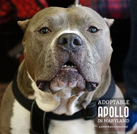 adopt a md 151 best maryland adopt foster sponsor me images on maryland a and