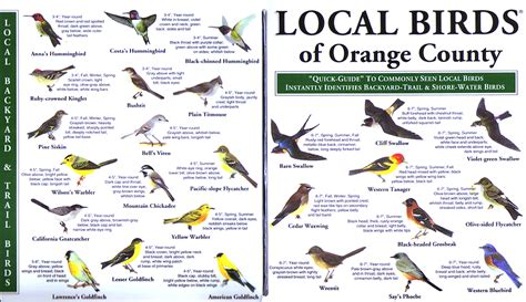 orange county local birds