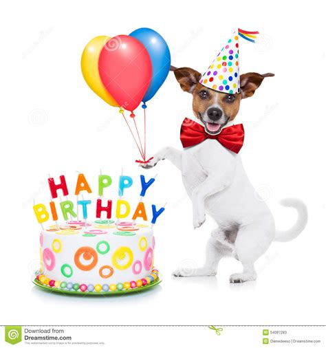 Happy Birthday Clip With Dogs Free by Happy Birthday Stock Image Image Of Gift Copy Frame